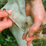 Het-haar-tot-aan-de-muis-wegknippen