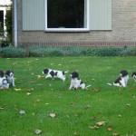 Pups Bieke x Spot