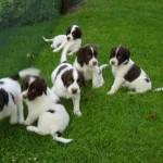Pups Senna