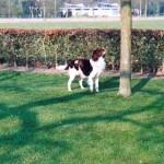 hondkijktinboom