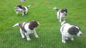 pups05042017 a
