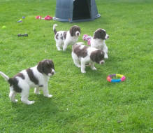 pups05042017 b
